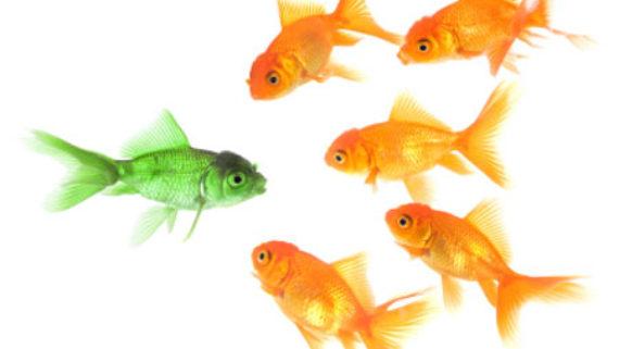 Så kommunicerar Fyran – Individualisten