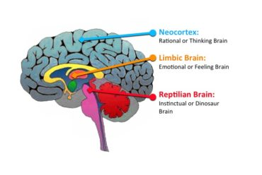 Du har tre intelligenser – hur använder du dem?
