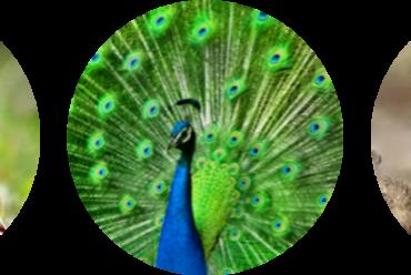 Poddavsnitt 13 – Biologiska instinkter